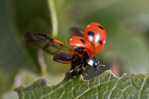 Bug Quiz